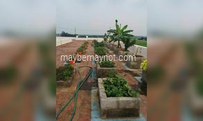 Maadi-Thottam Terrace-Garden